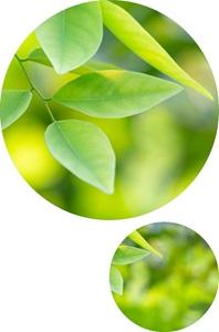 Blätter_Kreise
